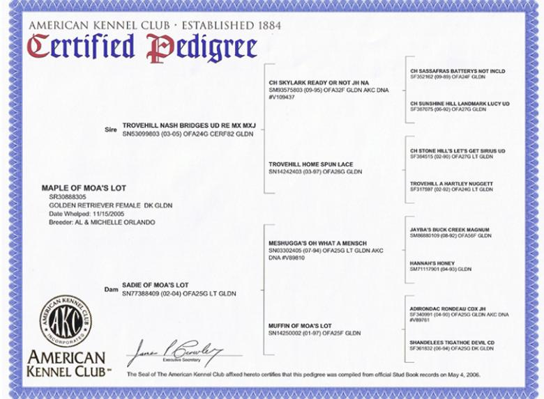 Certified Pedigree of Maple of MOA's Lot